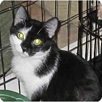 Adopt A Pet :: Patches - Catasauqua, PA