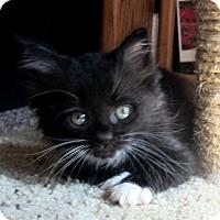 Adopt A Pet :: Nora - Arlington, VA