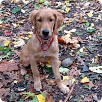 Adopt A Pet :: Oliver - New Canaan, CT