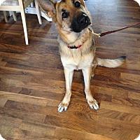 Adopt A Pet :: Echo - Evergreen Park, IL