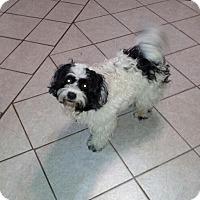 Adopt A Pet :: Mia - Denver, IN