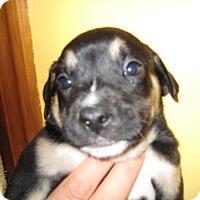 Adopt A Pet :: Spyker - richmond, VA