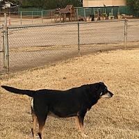 Adopt A Pet :: Rosie - Nuevo, CA