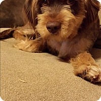 Adopt A Pet :: Cookie - Quincy, IN
