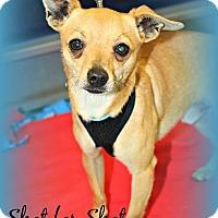 Adopt A Pet :: Milo - Lodi, CA