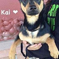 Adopt A Pet :: Kai - Mt. Prospect, IL