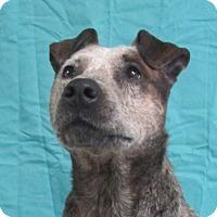 Adopt A Pet :: Patsy - LaGrange, KY
