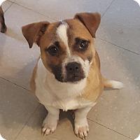 Adopt A Pet :: Harper - Shelby, NC