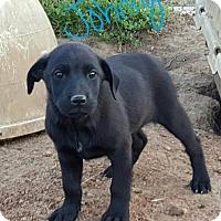 Adopt A Pet :: Johnny - Sussex, NJ