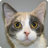 Adopt A Pet :: Echo - Kalamazoo, MI