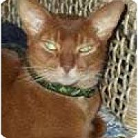 Adopt A Pet :: Topaz - Arlington, VA