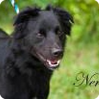 Adopt A Pet :: Nero - Middleburg, FL