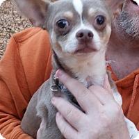 Adopt A Pet :: TY - Newnan, GA