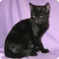 Adopt A Pet :: Zabu - Powell, OH