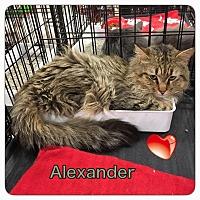 Adopt A Pet :: Alexander - Harrisburg, NC