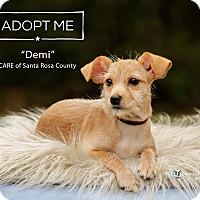 Adopt A Pet :: Demi - Navarre, FL