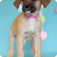 Adopt A Pet :: Purple - Waldorf, MD