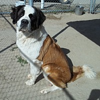 Adopt A Pet :: ZOEY - Sparks, NV