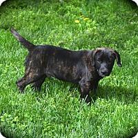 Adopt A Pet :: Kingbird - Ijamsville, MD