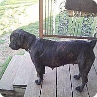 Adopt A Pet :: Roxy - Jennings, OK