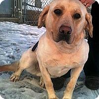Adopt A Pet :: Zena - Wasilla, AK