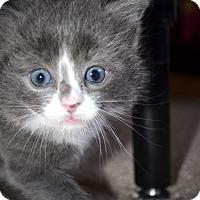 Adopt A Pet :: Teddy - Xenia, OH