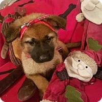Adopt A Pet :: Redda-Adopted! - Detroit, MI