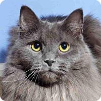 Adopt A Pet :: Jasper - Arlington, VA