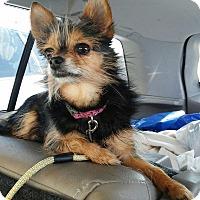 Adopt A Pet :: Lexi - Florence, KY
