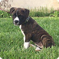 Adopt A Pet :: Lil Tink - New Oxford, PA
