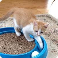 Adopt A Pet :: Gloria - Orlando, FL