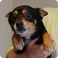 Adopt A Pet :: Binx - Sylva, NC