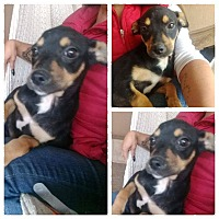 Adopt A Pet :: Monny - LAKEWOOD, CA
