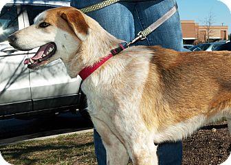 Collie Mix Dog for adoption in Richmond, Virginia - Daytona