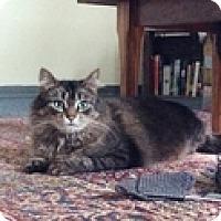 Adopt A Pet :: Lois - Vancouver, BC