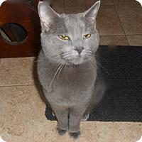 Adopt A Pet :: Rose - Riverside, RI