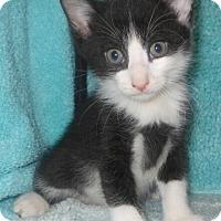 Adopt A Pet :: Mak - Reston, VA