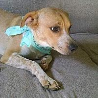 Adopt A Pet :: SPENCER - Nashville, TN