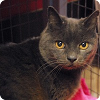 Adopt A Pet :: Baby Boop - Winchendon, MA