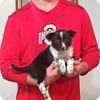 Adopt A Pet :: Bosco - South Euclid, OH