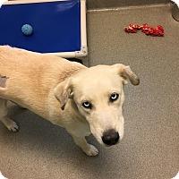 Adopt A Pet :: Daffodil 4963 - Columbus, GA