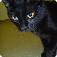 Adopt A Pet :: Danni - Hamburg, NY