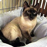 Adopt A Pet :: Kia - Long Beach, CA