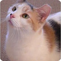 Adopt A Pet :: Dutchess - Jenkintown, PA