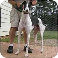 Adopt A Pet :: Doyle - Oak Ridge, NC