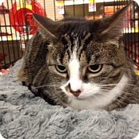 Adopt A Pet :: Riles - Cincinnati, OH