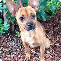 Adopt A Pet :: Ava - Austin, TX