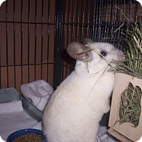 Adopt A Pet :: Gidget - Avondale, LA