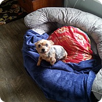 Adopt A Pet :: Cricket - Dothan, AL