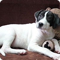Adopt A Pet :: Maryann - Washington, DC